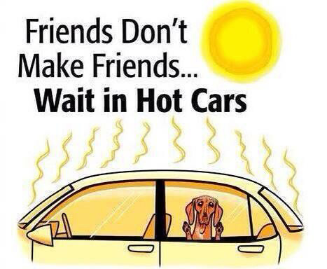 Child Or Dog Left In Roasting Hot Car