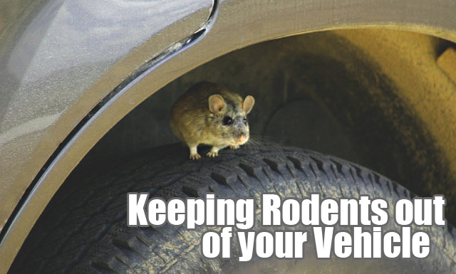Keeping Rodents out of your Vehicle
