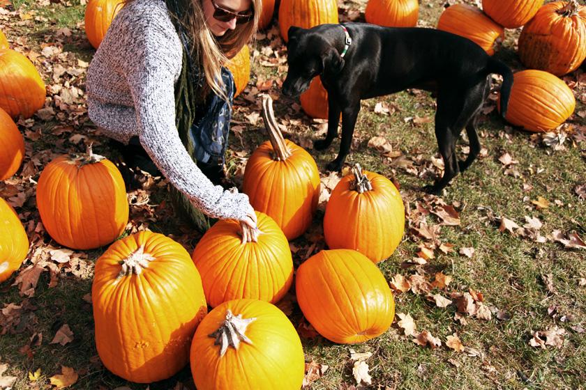 Pumpkin Picking in Fall
