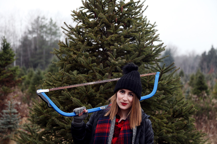 Christmas Tree Farm photo