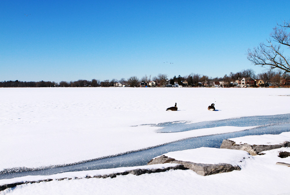 Lake Wilcox in winter