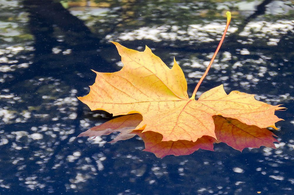 Car Detailing in Fall