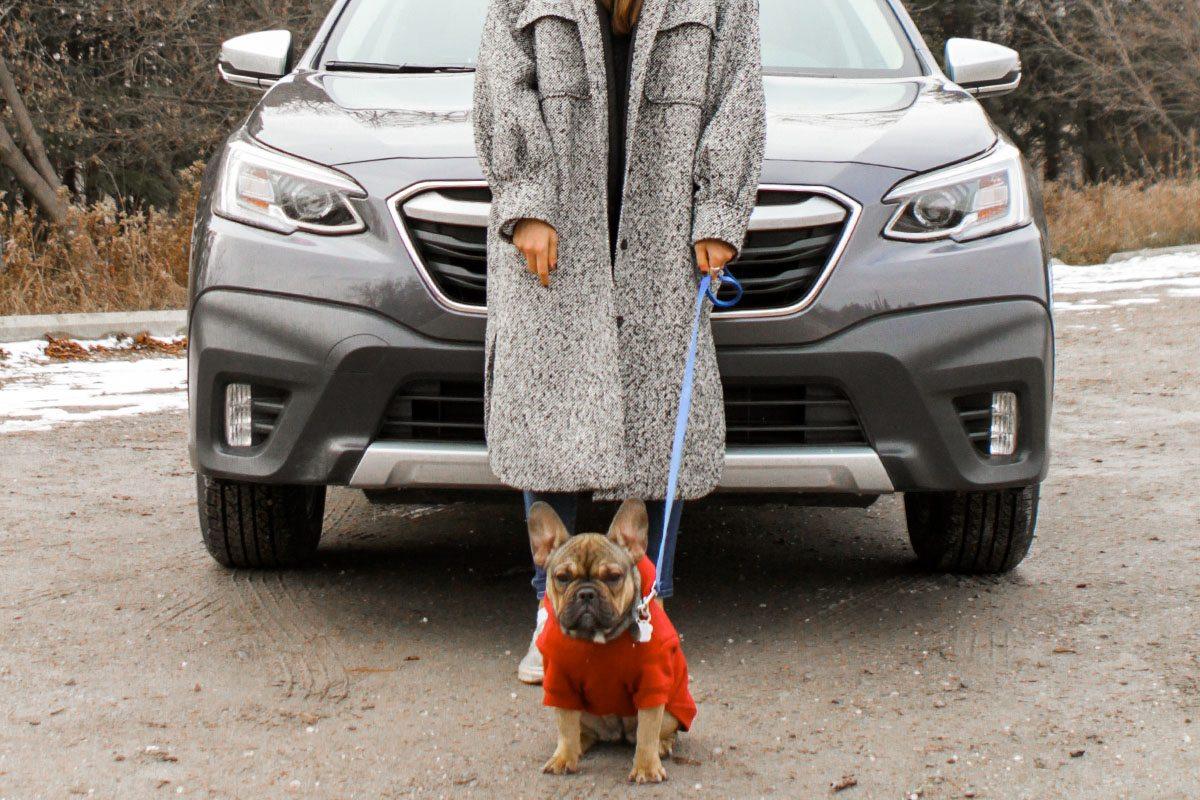 Subaru Outback with dog